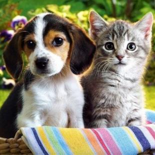Котки срещу кучета!
